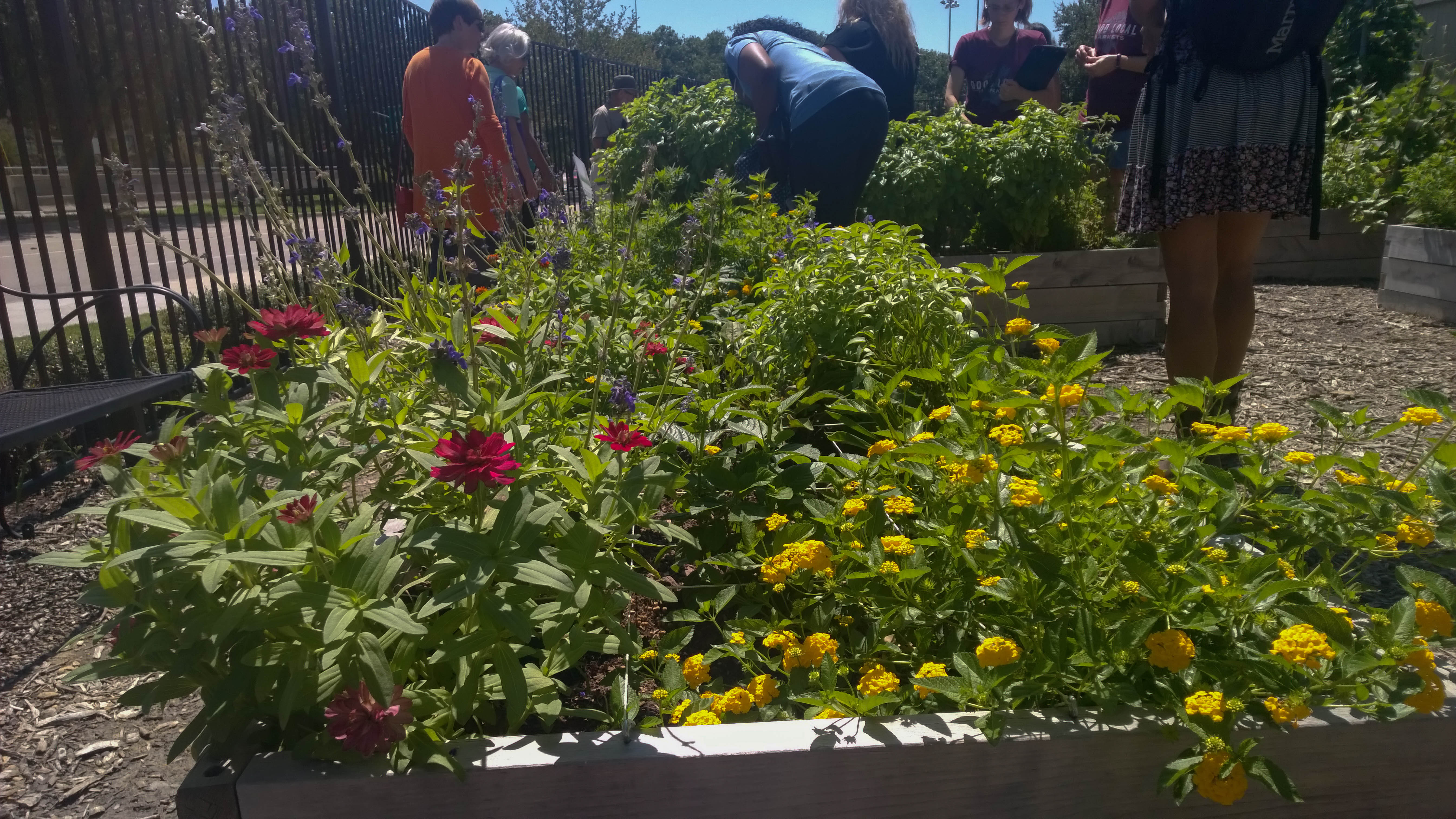 Local foods local places garden tour greendallas for Local landscape gardeners