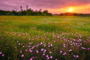 Dallas, skyline, Trinity RIver levee, wildflowers
