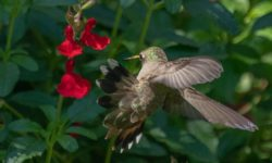 photo for a humming bird blog